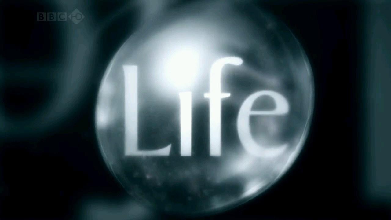 BBC.Life.s01e01.Challenges.of.Life.2009.HDTV.720p.x264.AC3.www.tvniko.com.mp4_snapshot_00.11_[2015.08.13_09.34.47]