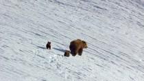 Bears.2014.720p.www.tvniko.com.mp4_snapshot_00.06.00_[2015.08.24_04.16.46]
