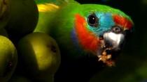Australia.Land.Of.Parrots.2008.BDRip.XviD.www.tvniko.com.mp4_snapshot_01.56_[2015.09.04_04.07.23]