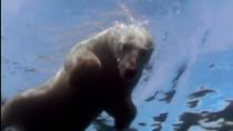 Polar.Bears.A.Summer.dyssey.2012.720p.www.tvniko.com.mp4_snapshot_00.34_[2015.09.27_03.41.45]
