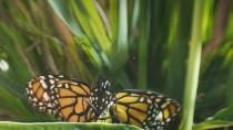 Flight.of.the.Butterflies.2012.720p.www.fileniko.com.mkv_snapshot_06.23_[2015.12.30_14.37.52]