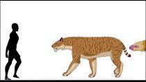 جانوران دوره سنوزوئیک